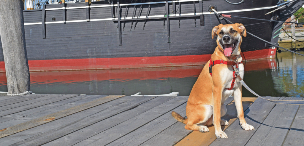 Win a free membership to Mystic Seaport Museum with theSaltiest Dog Photo Contest